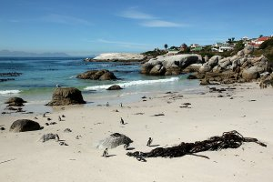 Penguins on Boulders Beach.