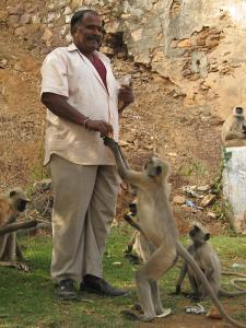 A man feeding monkeys in Bundi.