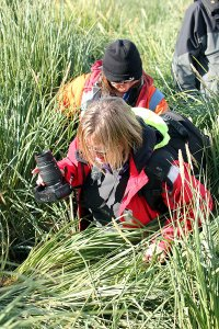 Helen and Sandra wading through tussock grass.