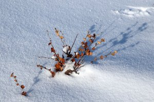 A bit of colour sticking out from the snow.