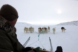 Relaxed travelling by the dog sledge.