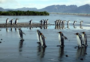 A penguin highway.