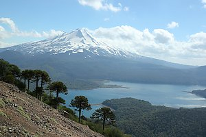 The Conguillio lake, with Volcano Llaima in the background and a row of Araucarias in the front.
