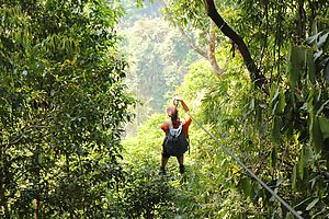 Riding a zipline through the jungle in the Gibbon Experience, Laos.